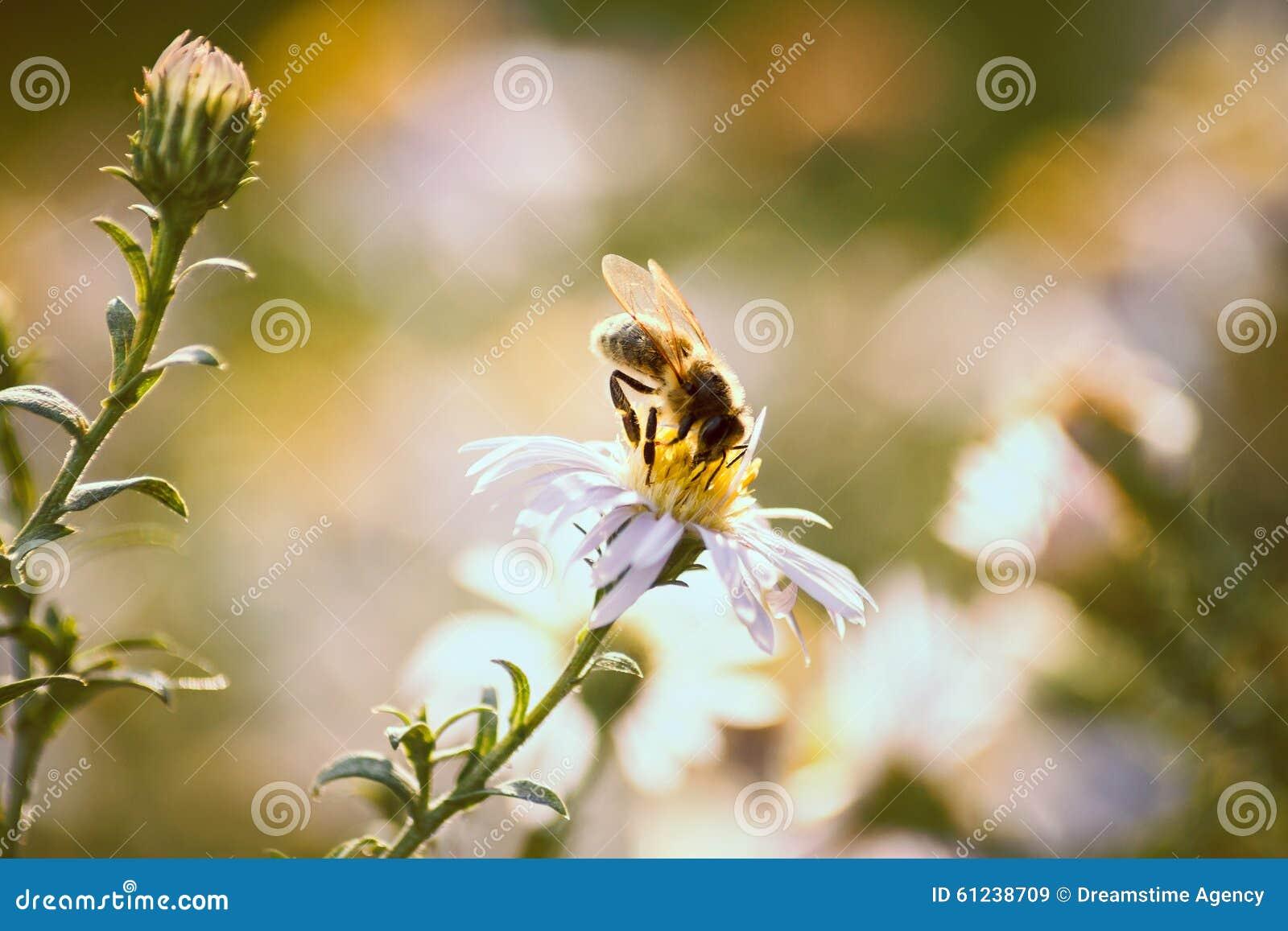 Abeja en una flor