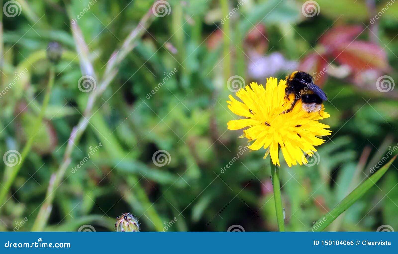 Abeja en una flor salvaje