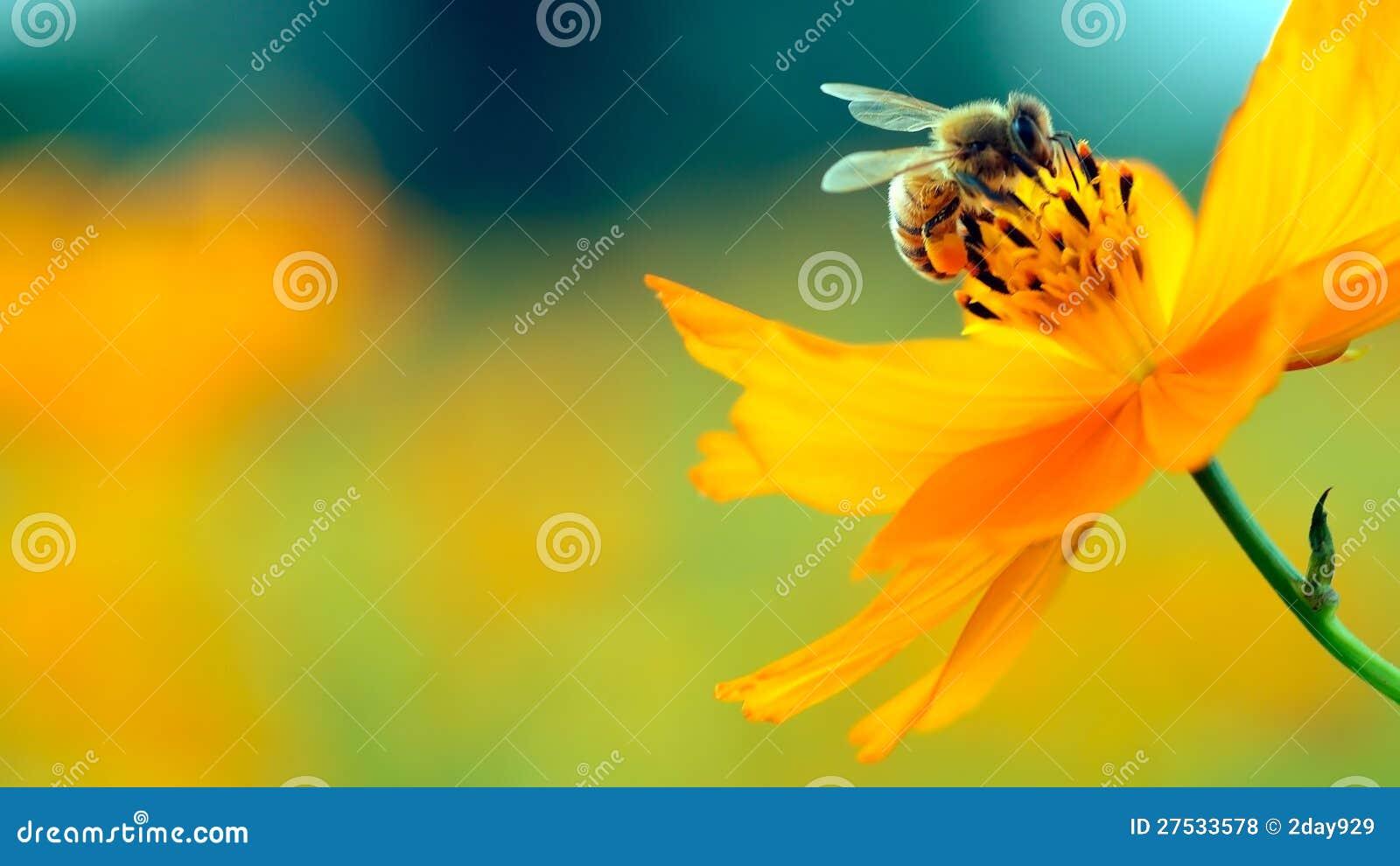 Abeja y flor