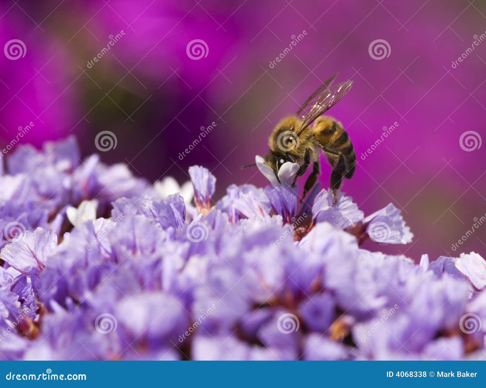 Abeja y flores