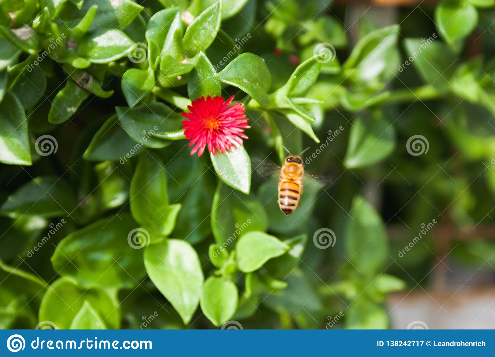 A abelha do mel