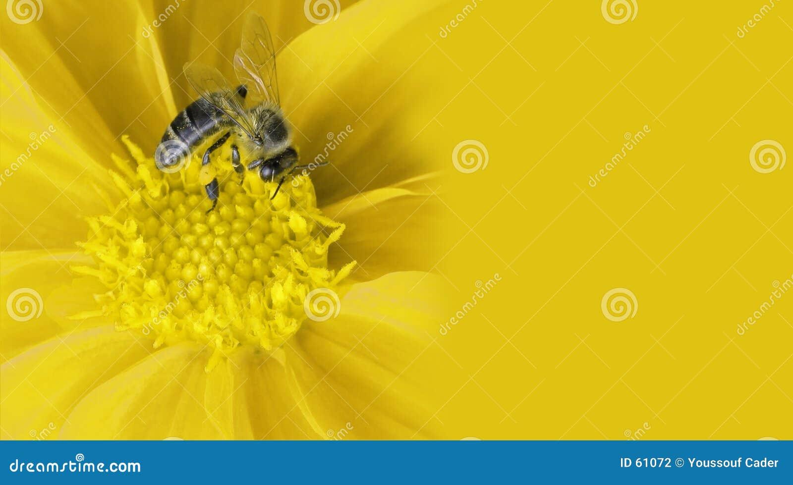 Abelha do mel na flor