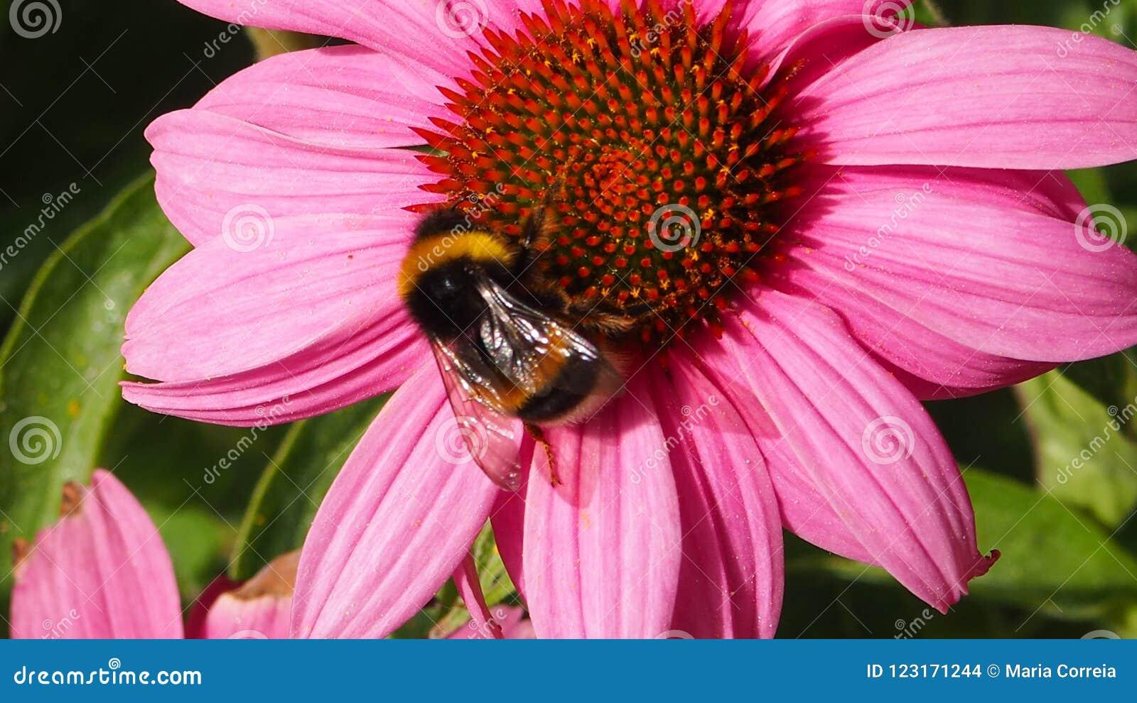 Abelha em uma flor