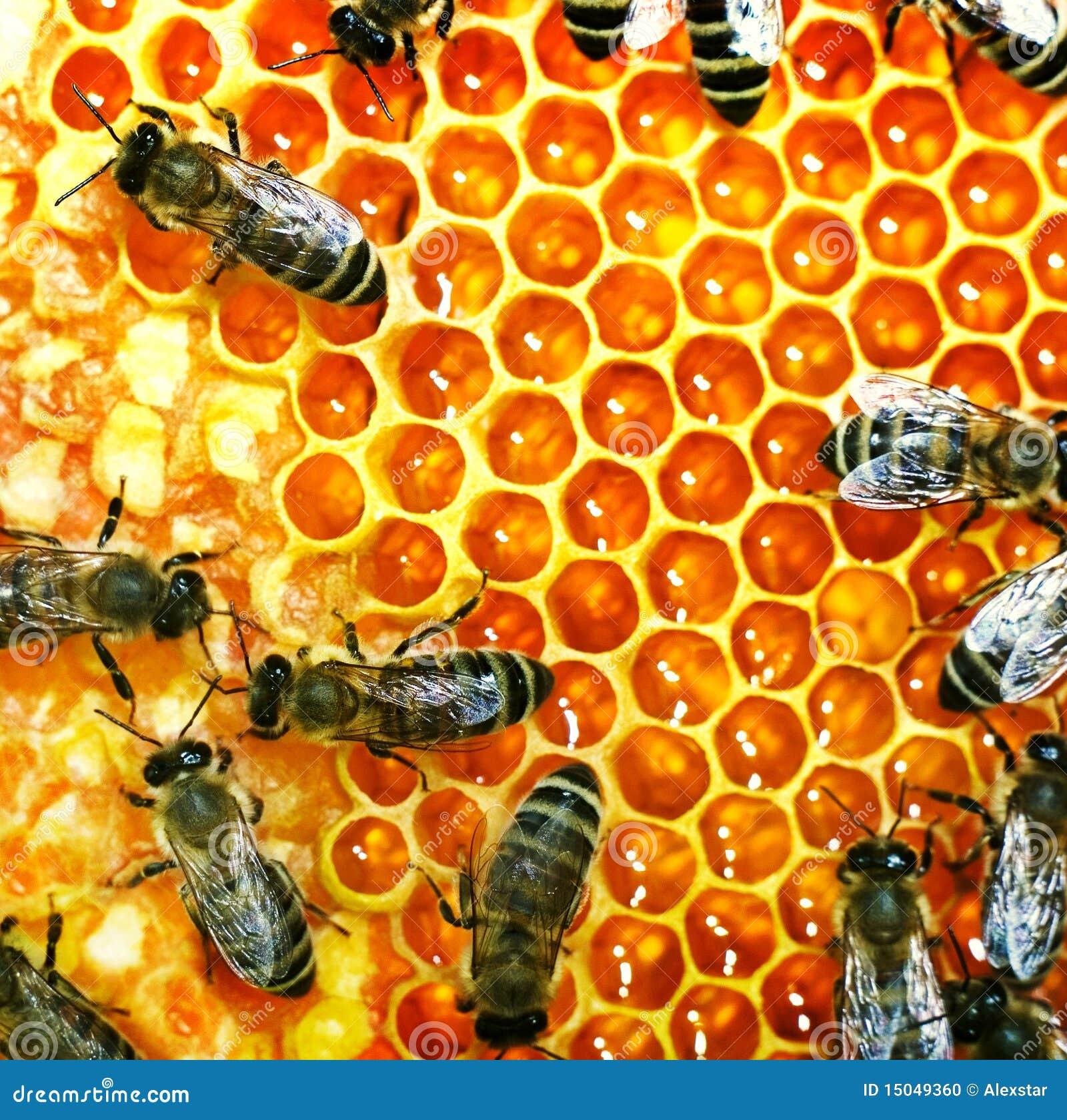 Abelhas do mel na colmeia