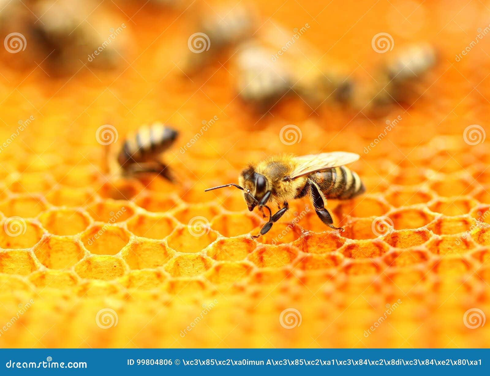 Abelhas no favo de mel