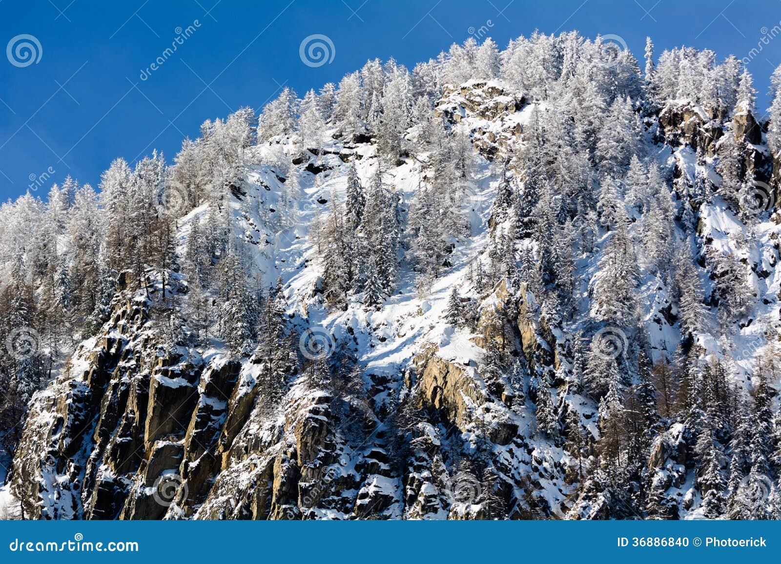 Download Abetaia di Snowy fotografia stock. Immagine di paese - 36886840