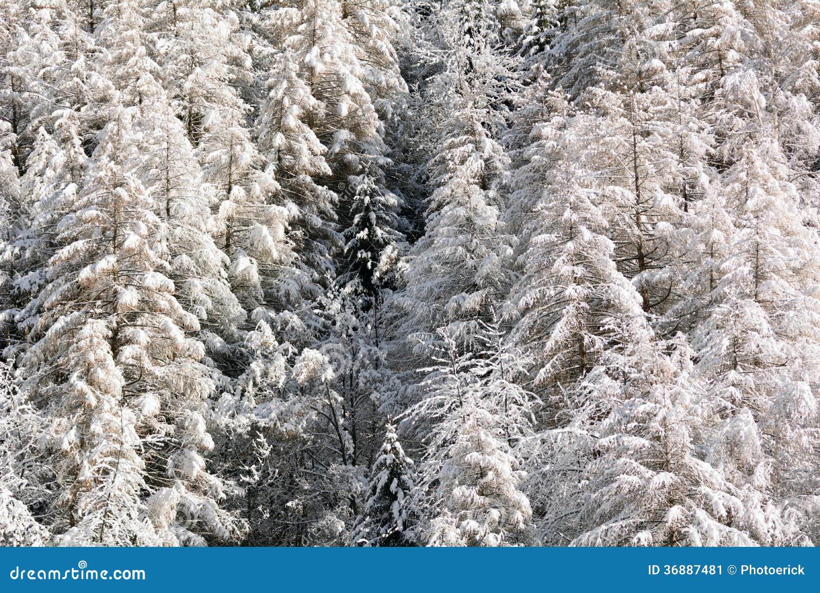 Download Abetaia di Snowy immagine stock. Immagine di natale, festa - 36887481