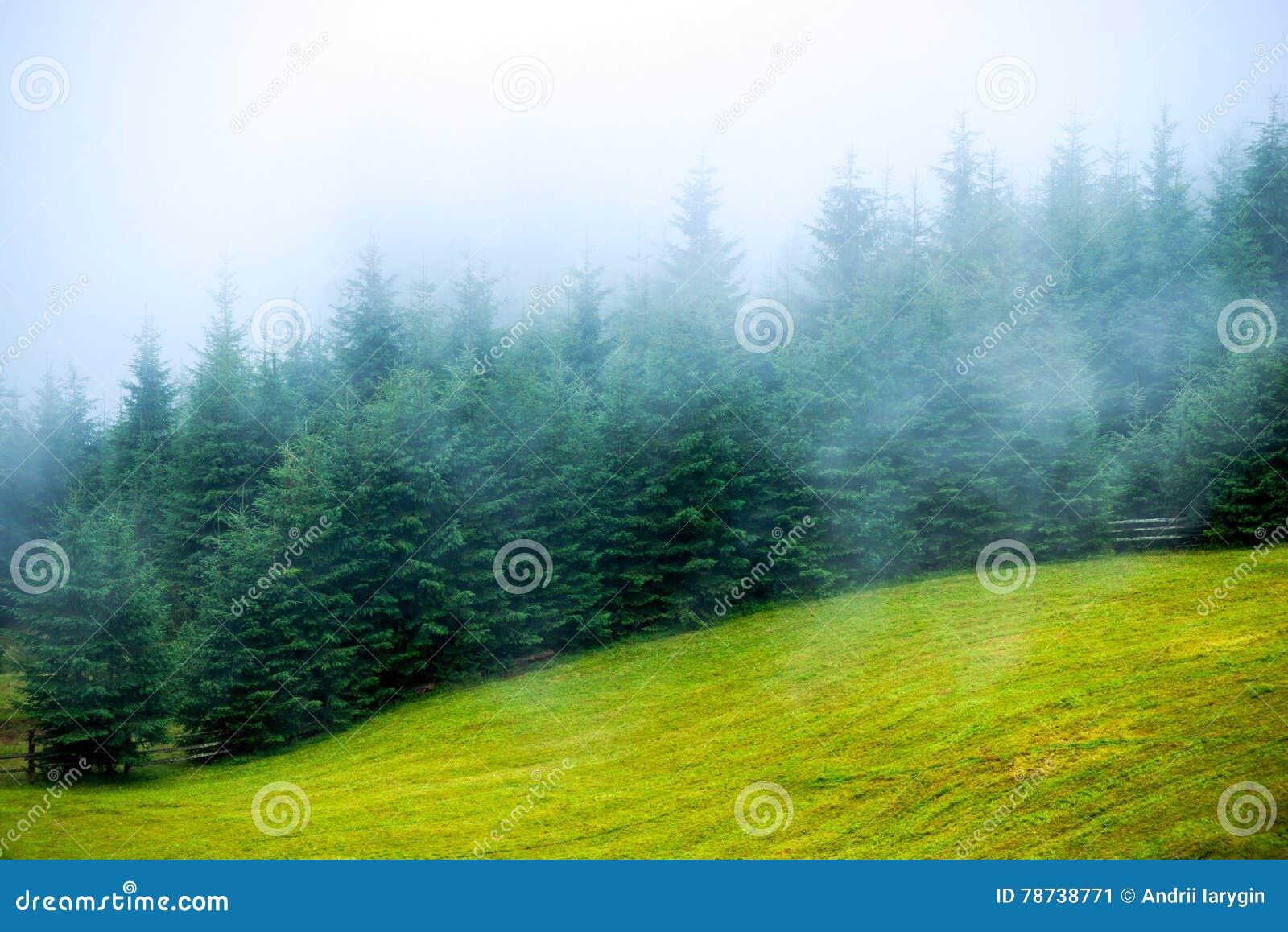 Abete della foschia della nebbia