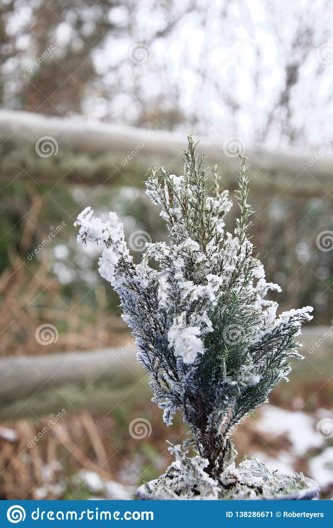 Abeto minúsculo da árvore de Natal espanado com neve fora