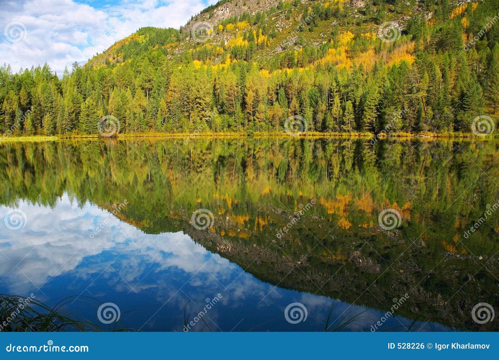 Abetos e lago pequeno