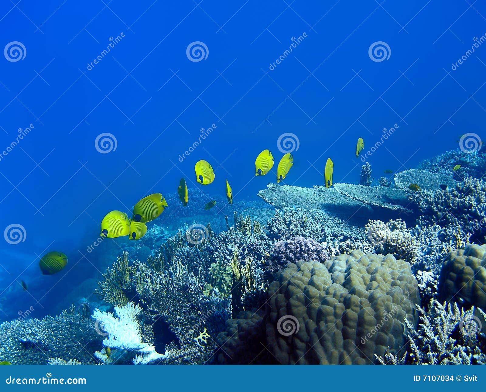 Abgedeckte Basisrecheneinheitsfische