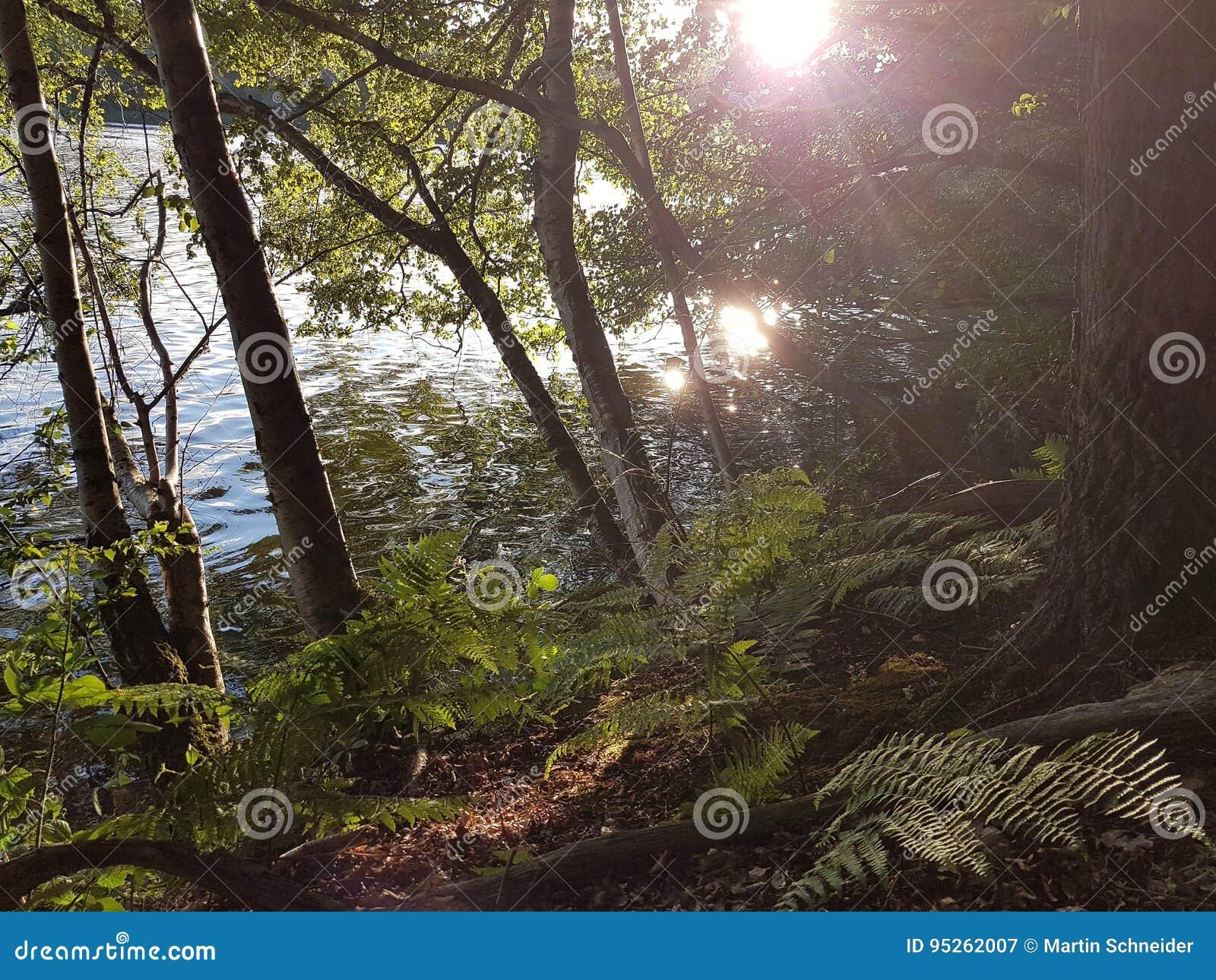 Abhang auf einem See mit Bäumen und Farnen