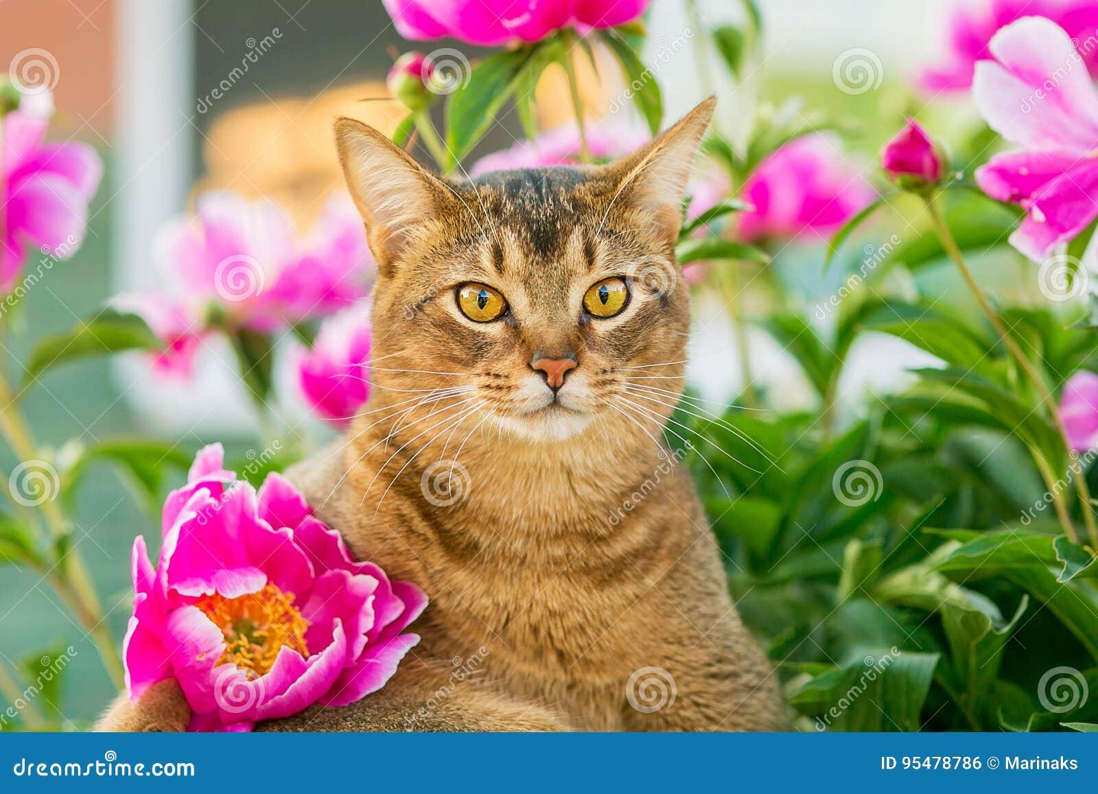 Abisyński kot w kwiatach
