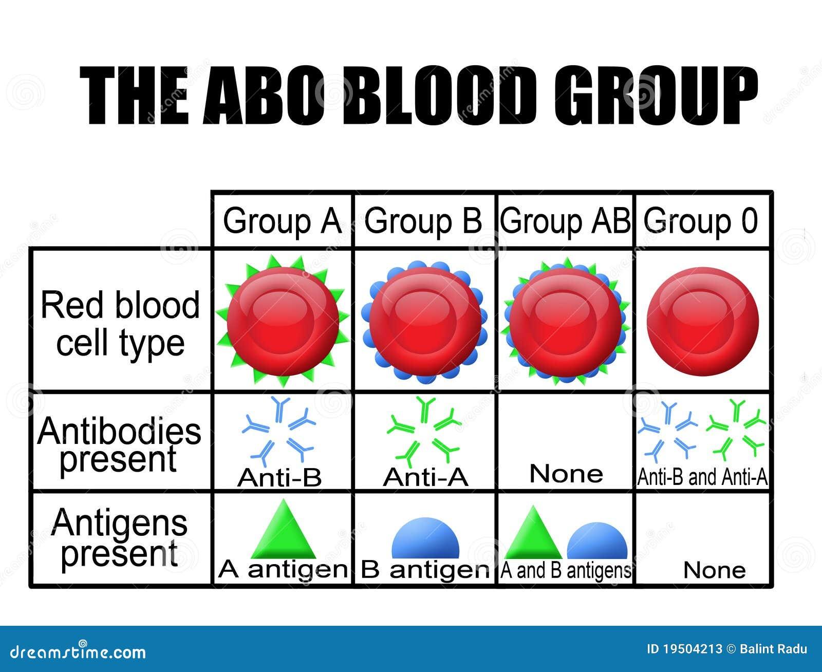 The Abo Blood Group Diagram Stock Photos