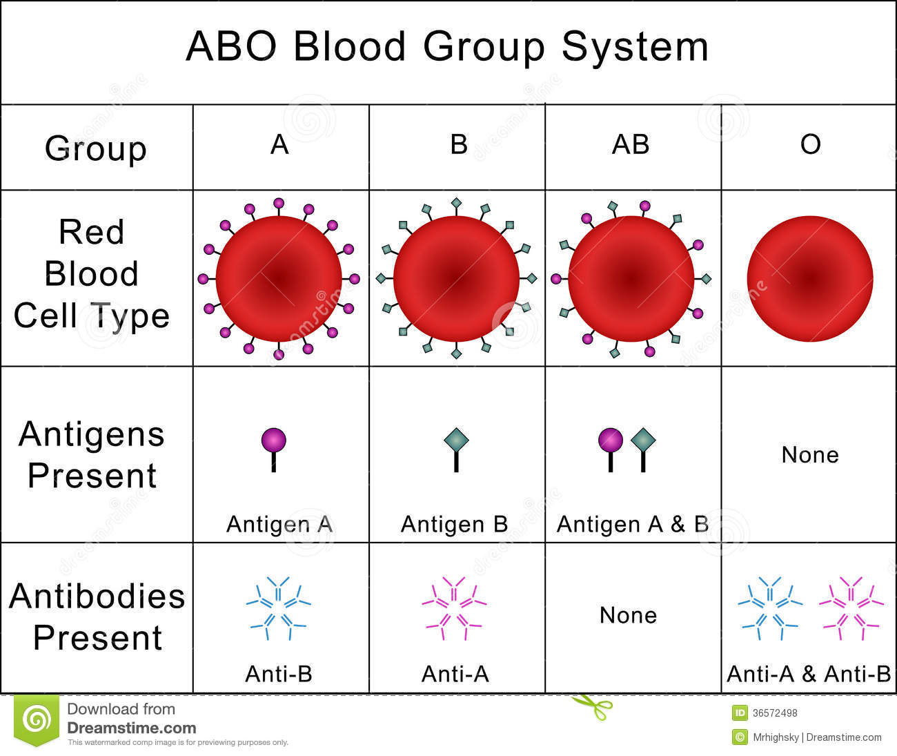 Abo blood group labeled diagram stock vector illustration 41451229 abo blood group system royalty free stock photos pooptronica