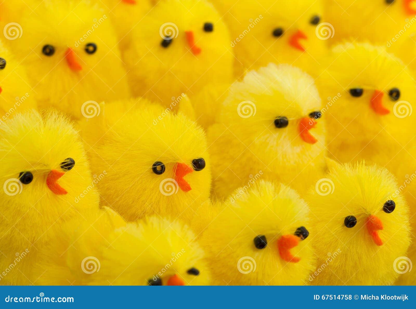 Abondance de poussins de Pâques, foyer sélectif