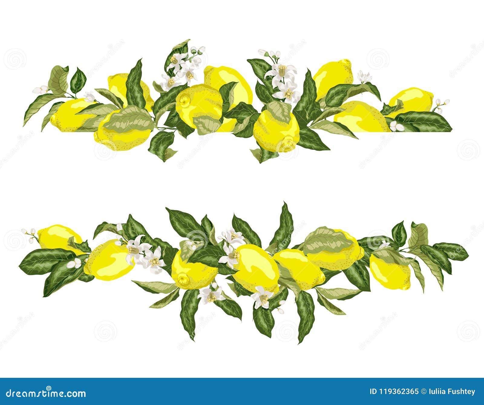 Abone la frontera del marco con cal de la plantilla con agrios y flores en