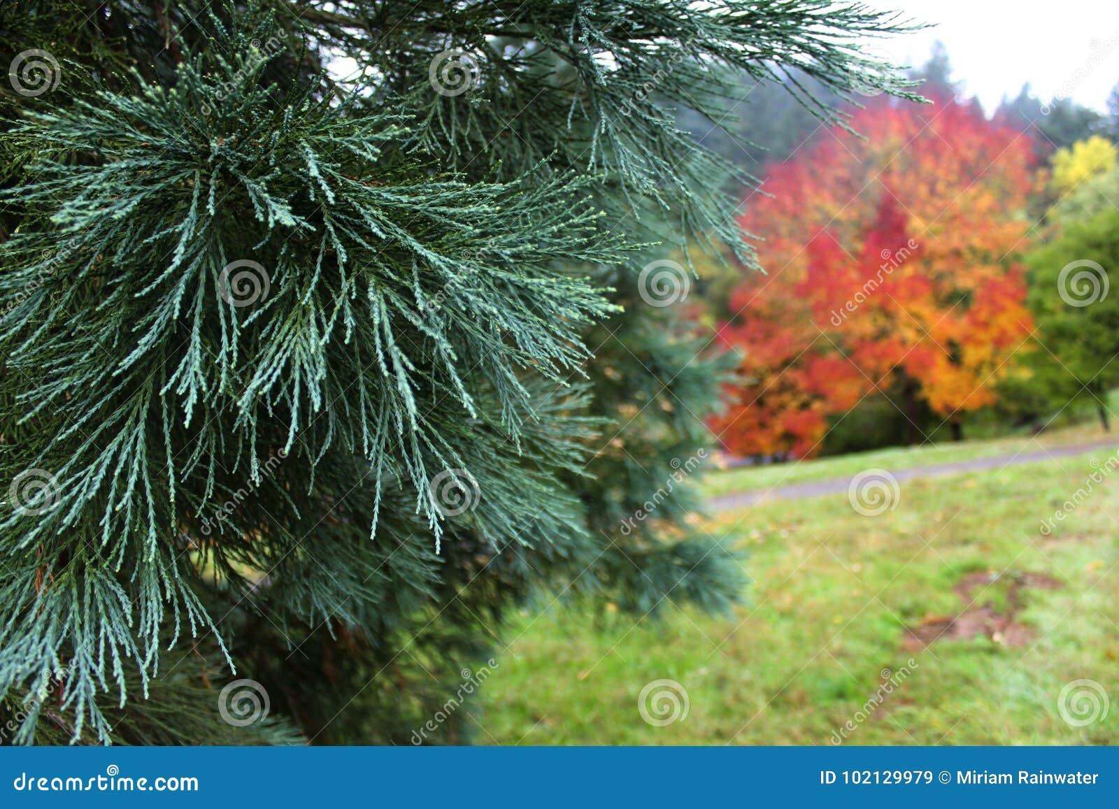 Aboretum in Autumn