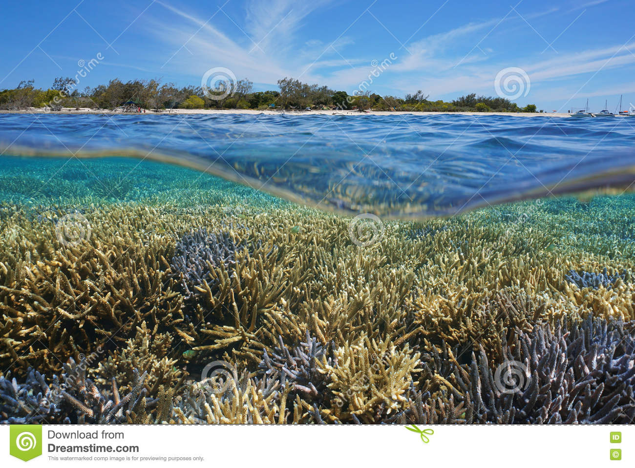 above and below water. above below water coral reef island new caledonia and