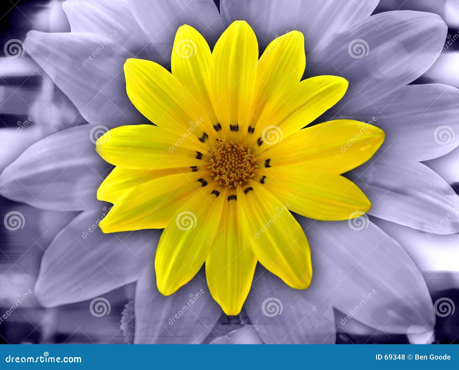 Abrégé sur fleur