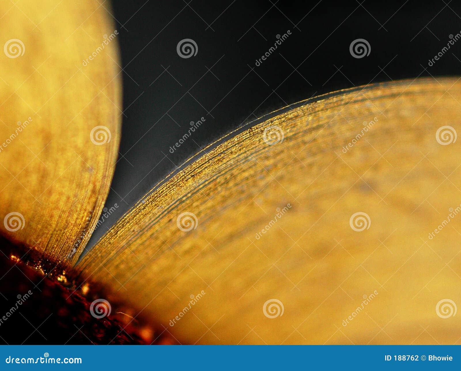 Abra el libro de la hoja de oro