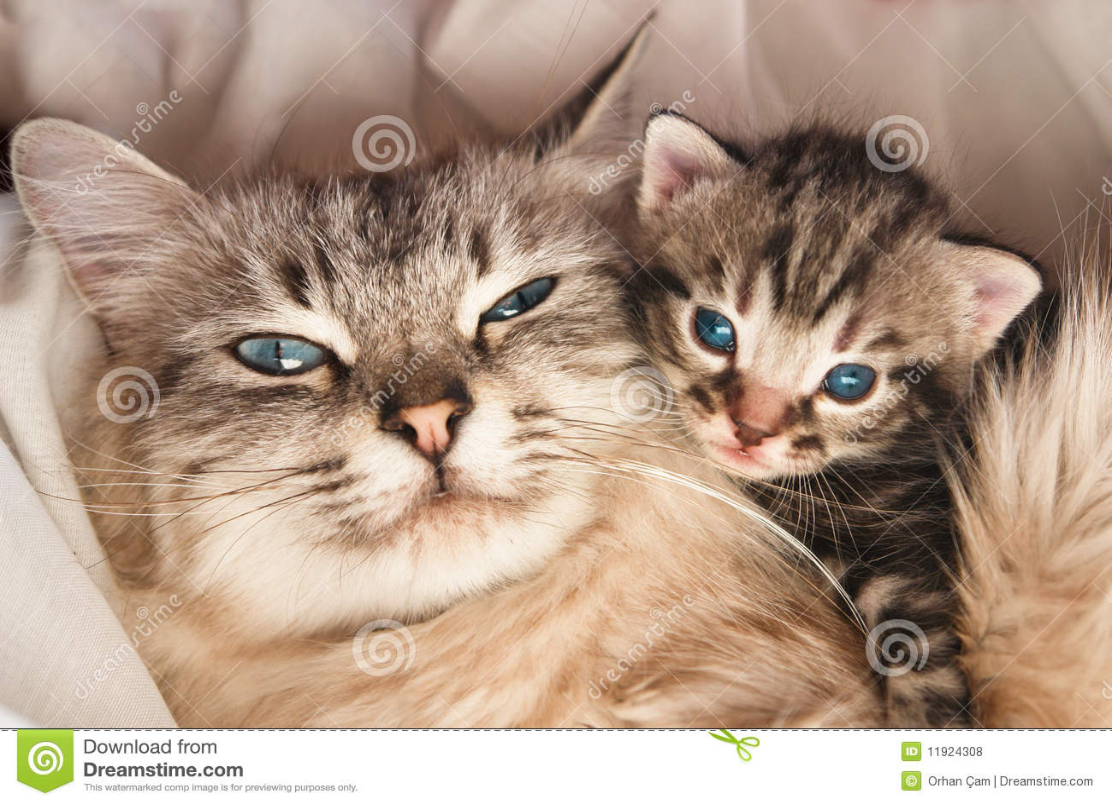 Abrazo del gato y del gatito