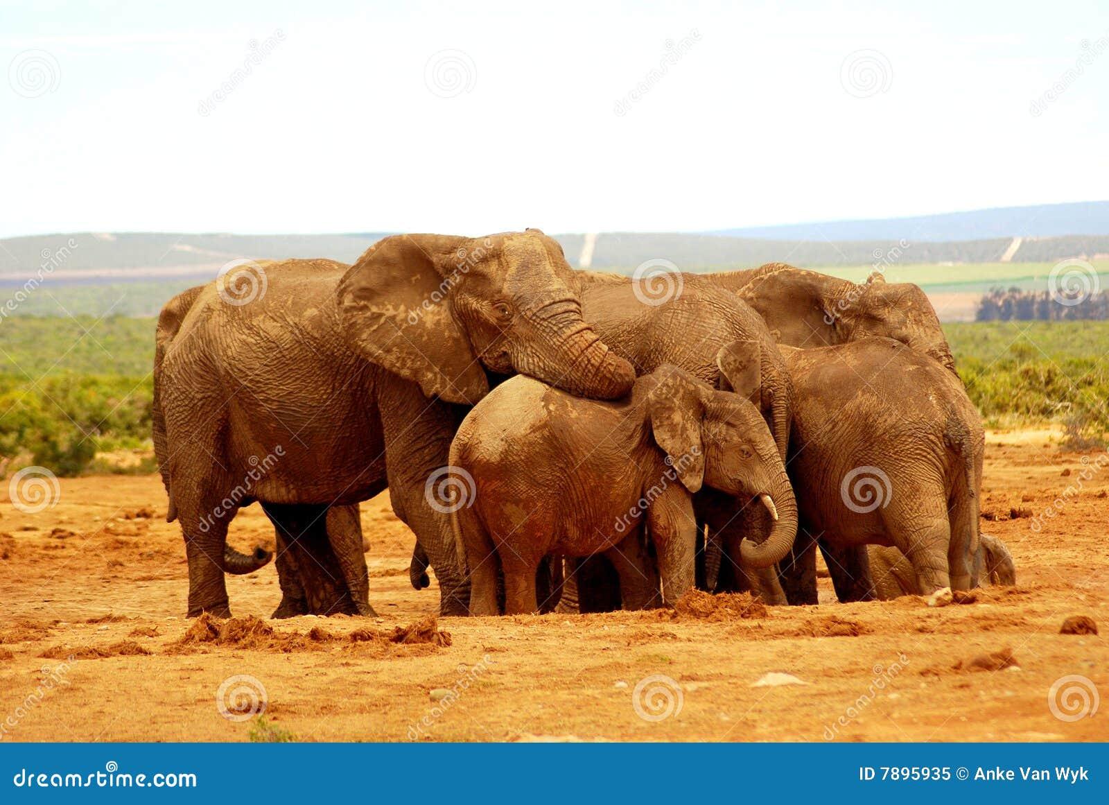 Abrazo del grupo del elefante
