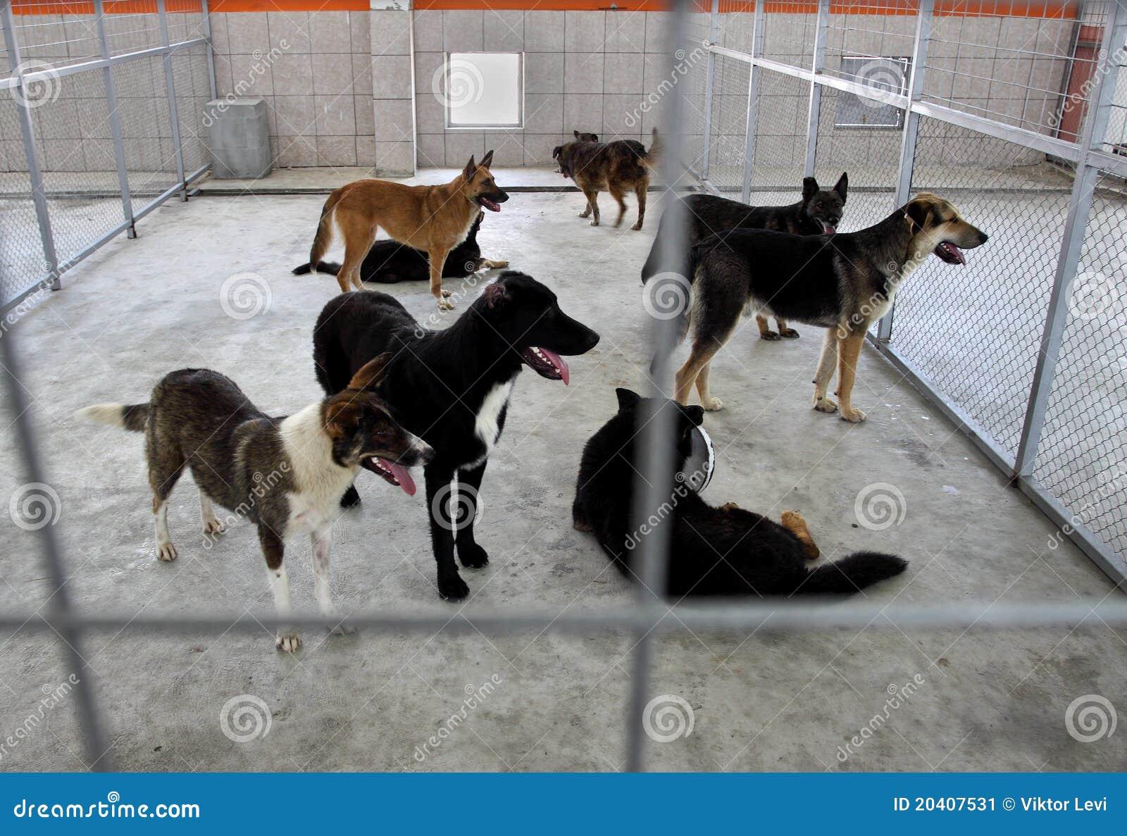 Abrigo sin hogar de los perros