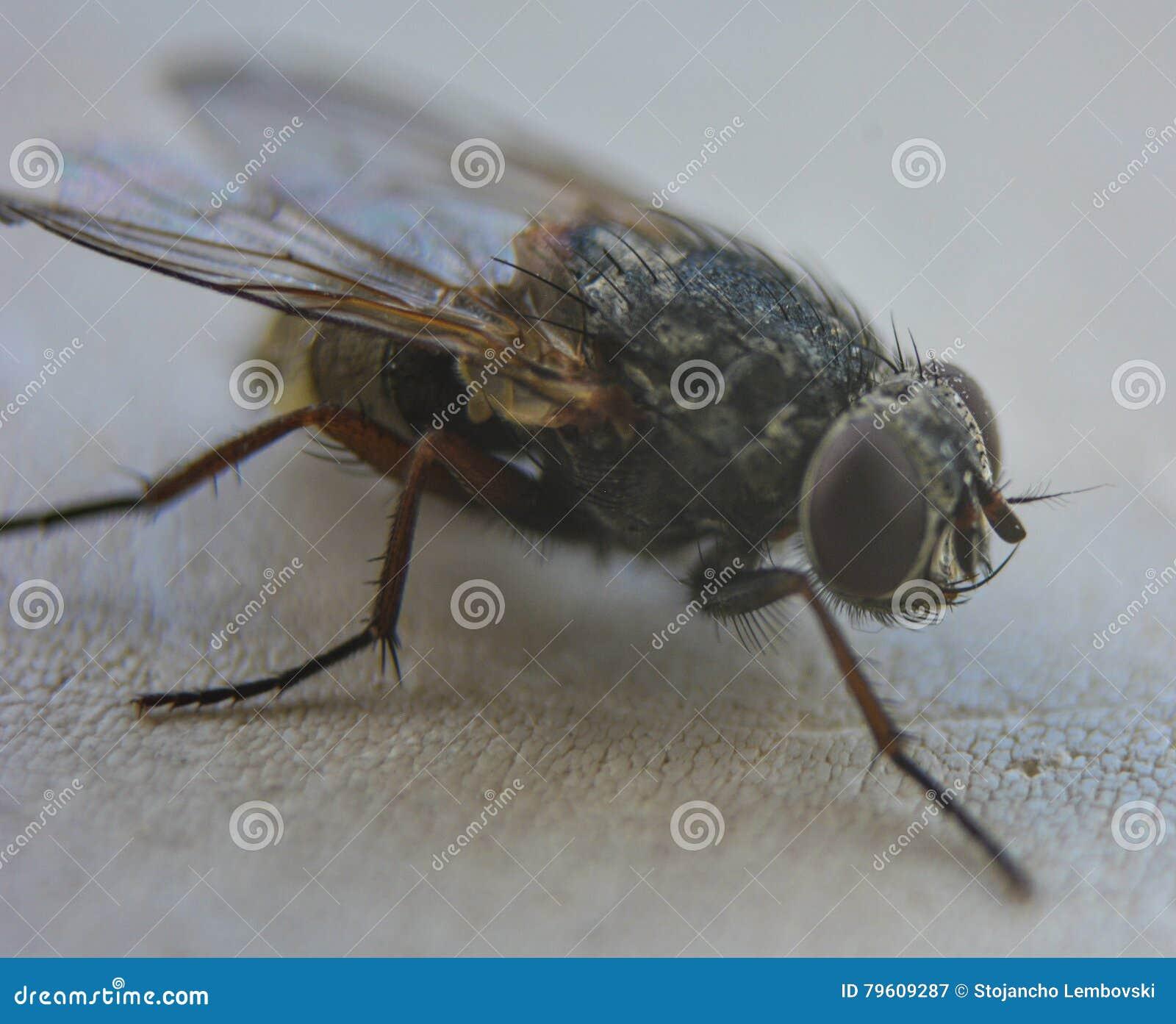 Abrigue a mosca