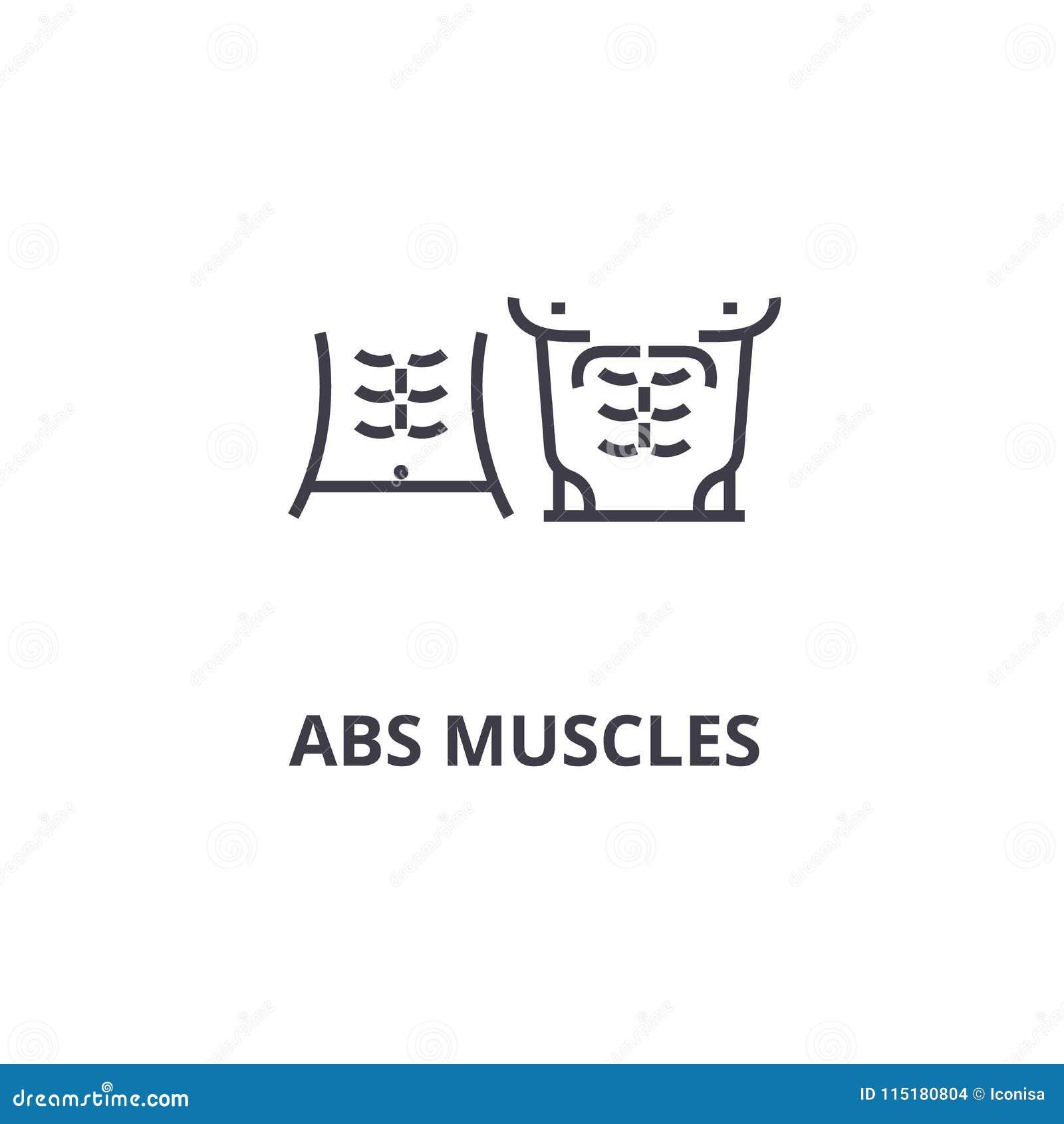 ABS muscules verdünnen Linie Ikone, Zeichen, Symbol, illustation, lineares Konzept, Vektor