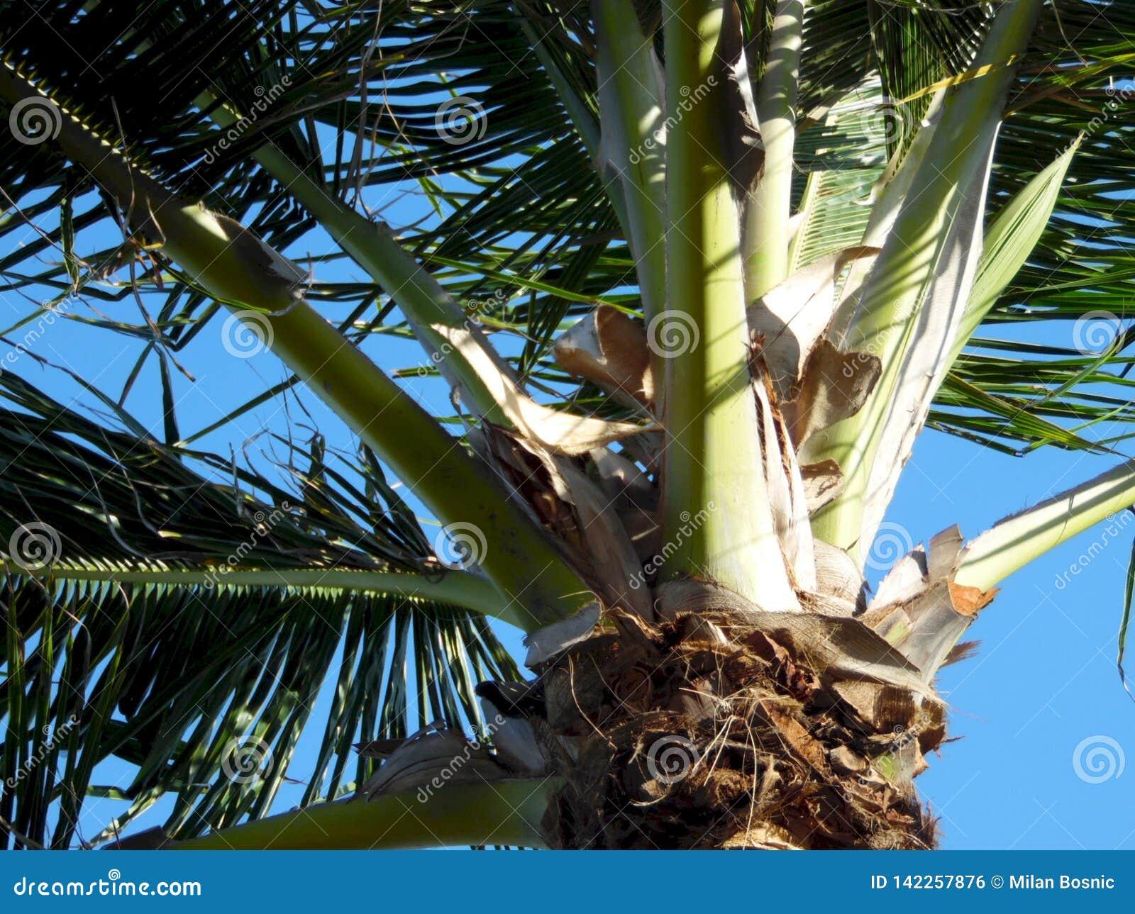 Abschluss der Palme oben