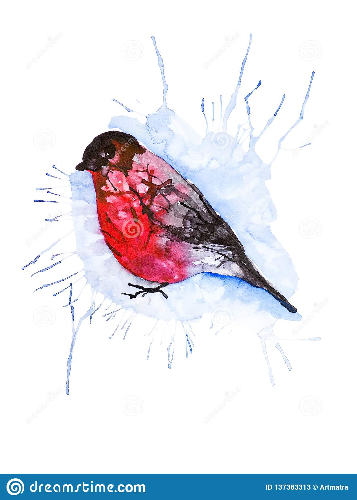 Absrtact watercolor illustration of a bullfinch bird isolated on white background
