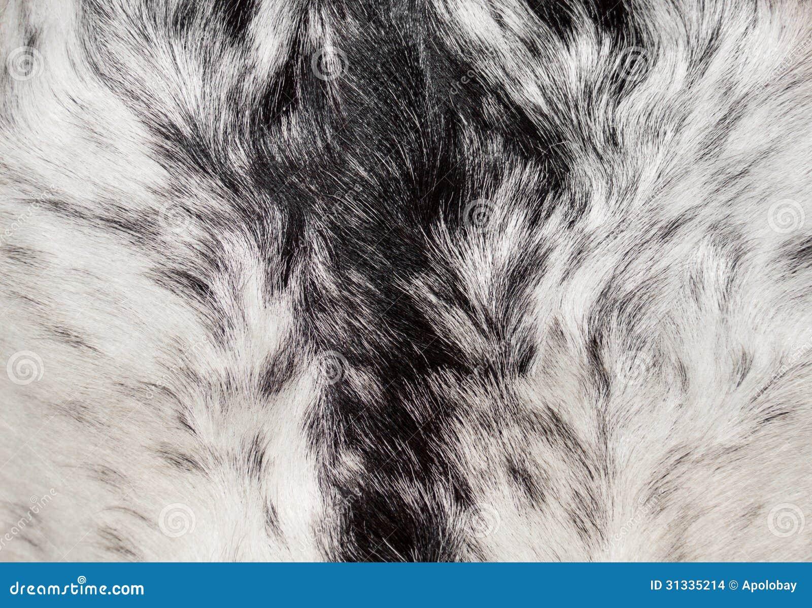 texture fur animal background - photo #21