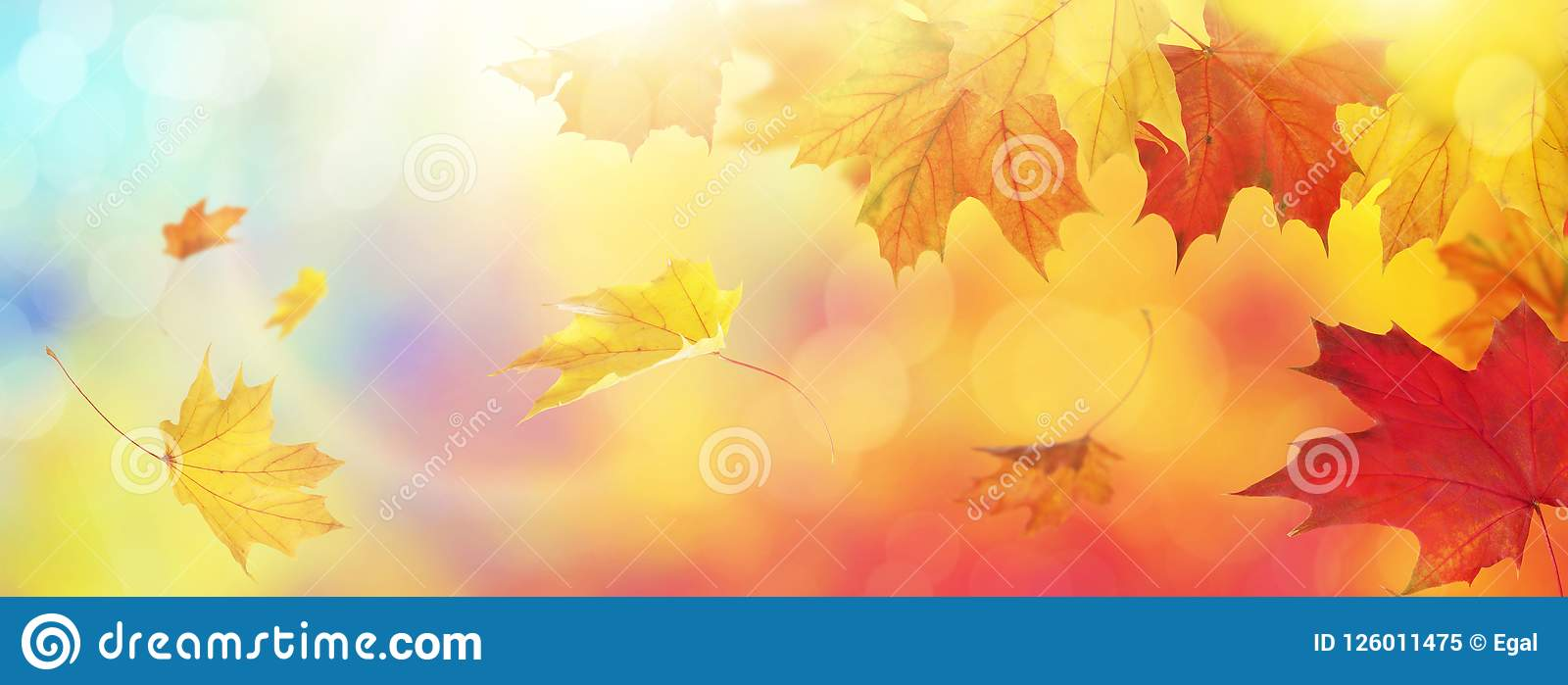 Download Abstract autumn background stock image. Image of leaves - 126011475