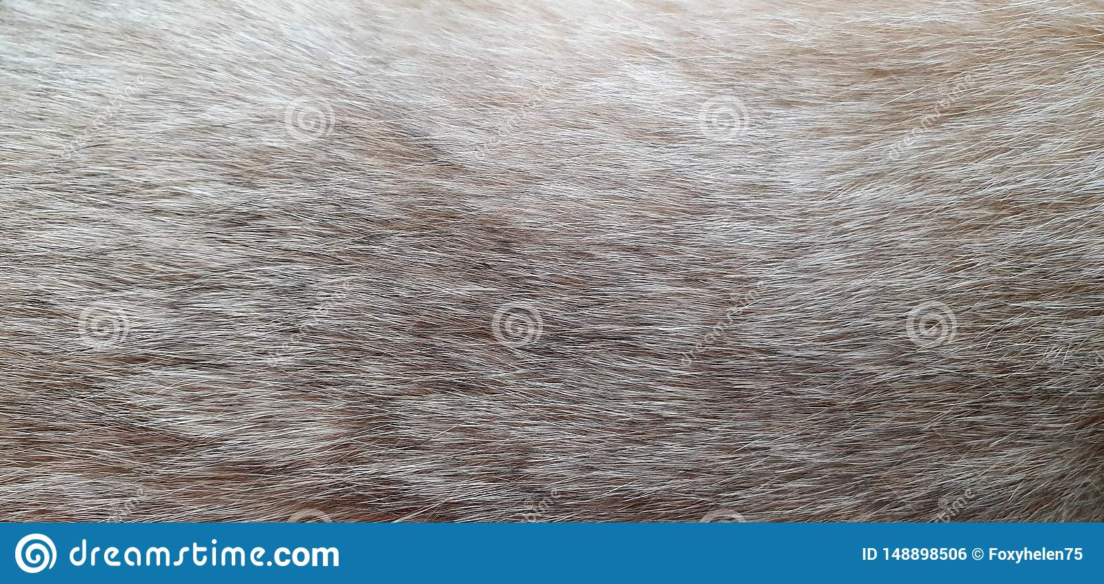 Abstract background, cat fur close up, cat of British breed of gold ticked color, free space for text