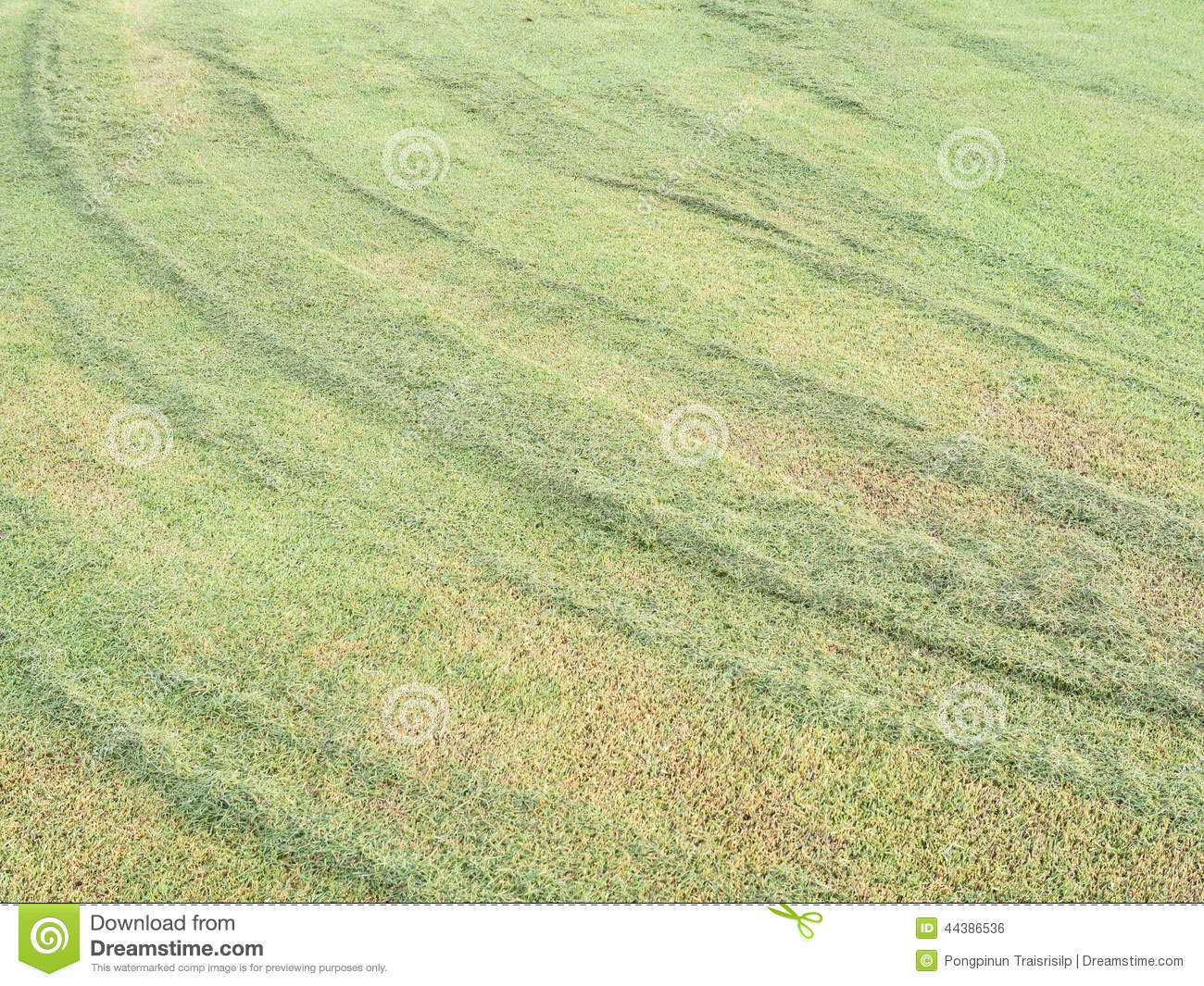 Abstract Background : Green Grass Texture From Golf Course ...