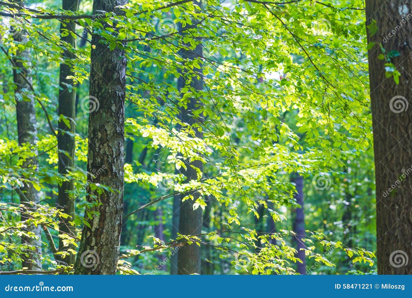 abstract tree branches stock image cartoondealercom