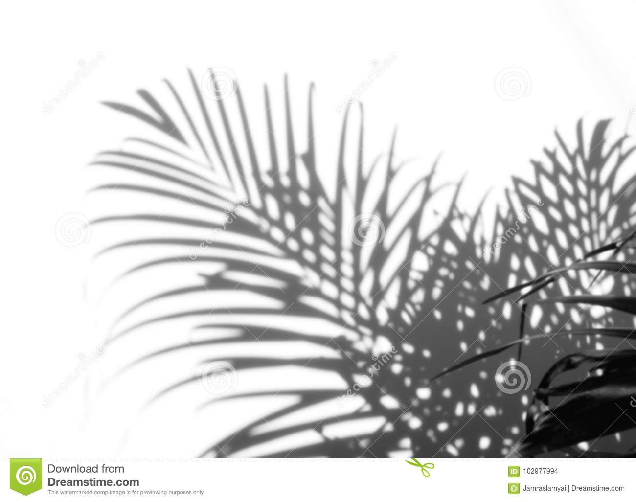 Abstract background of shadows palm leaf on a white wall