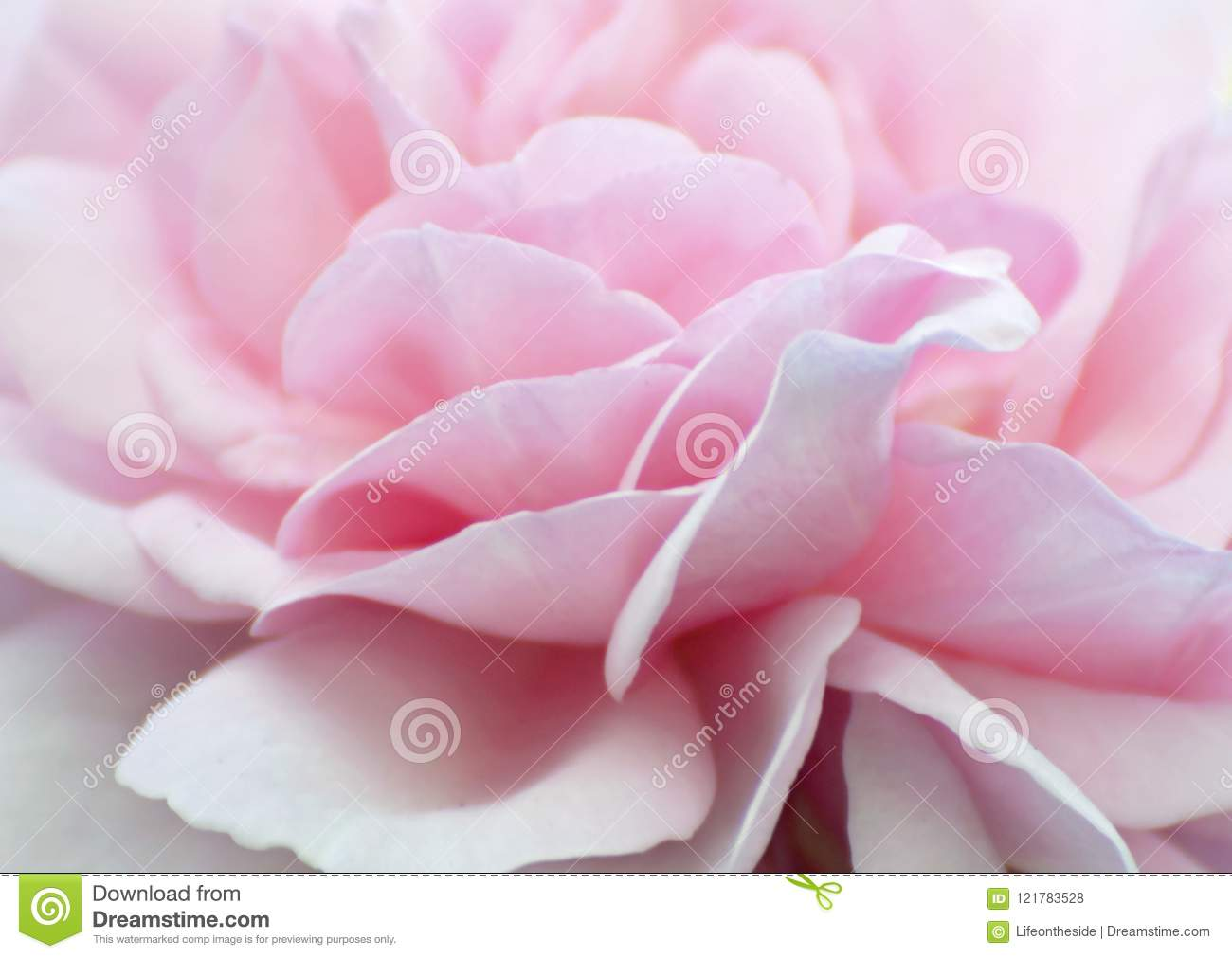 Abstract background soft pale baby pink rose petals wallpaper