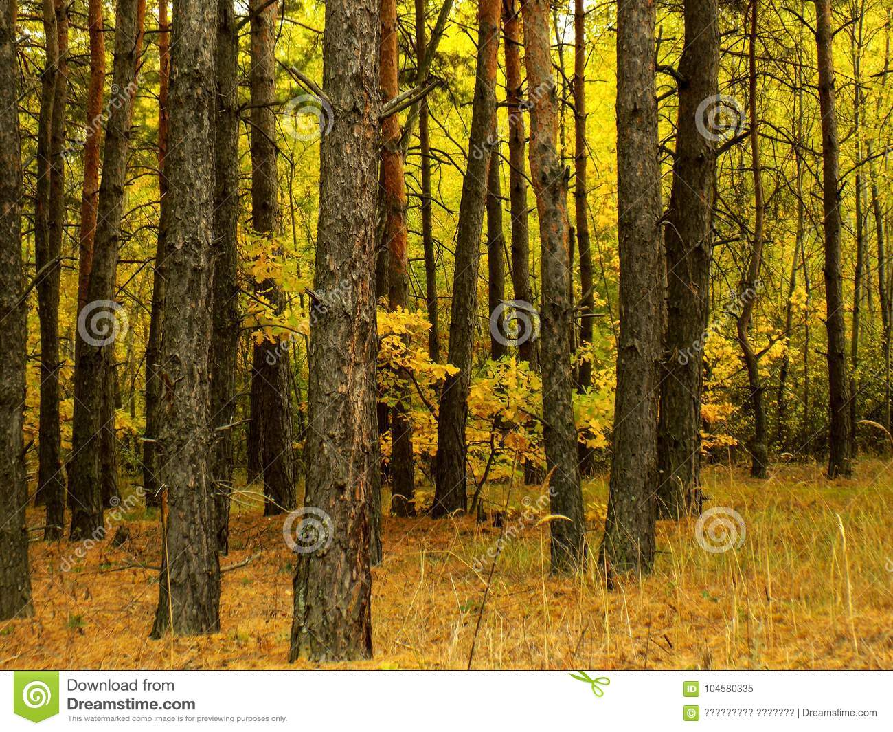 Abstract Beautiful Forest Background Nature Wallpaper Backgrounds