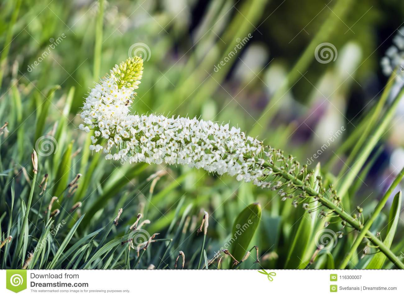 Abstract beautiful white flowers lawn green grass sunny day in download abstract beautiful white flowers lawn green grass sunny day in park mightylinksfo