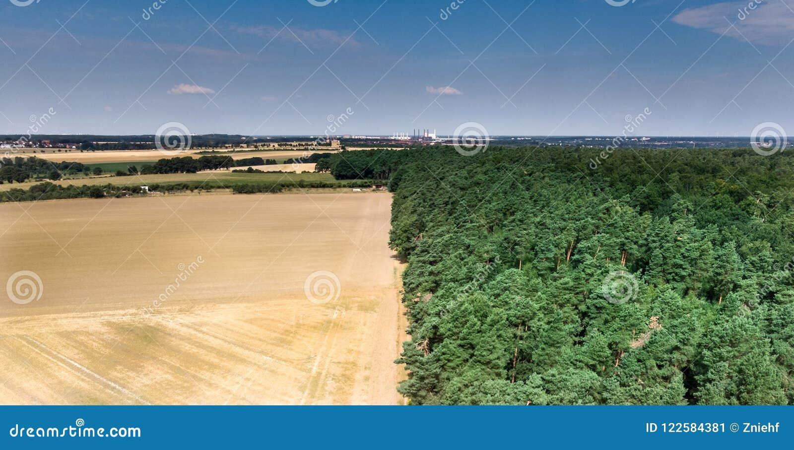 Abstract beeld van een geoogst die tarwegebied, bij een bosgrens, in het midden, met blauwe hemel op de achtergrond wordt verdeel
