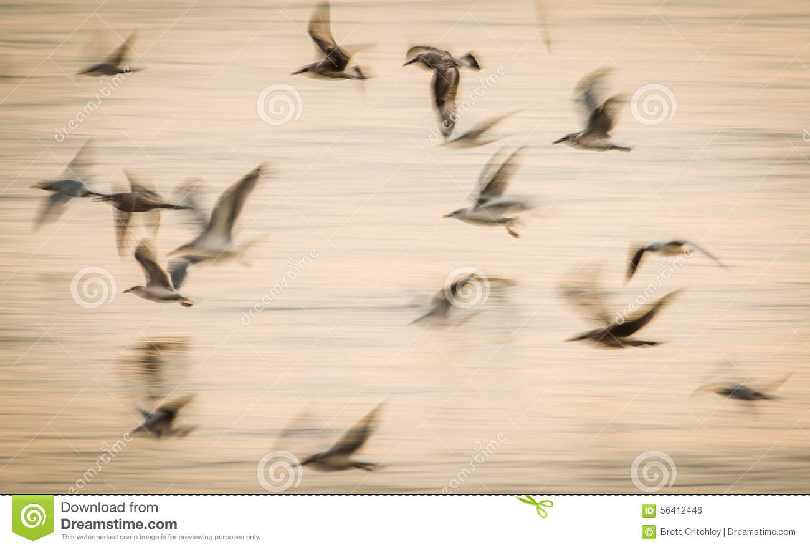 Abstract birds flight speed movement