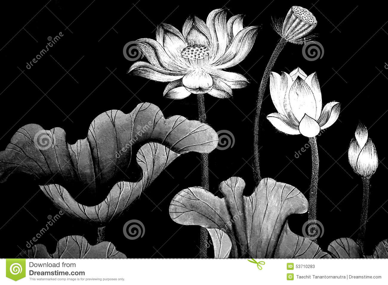 Black And White Line Drawing Flower : Pencil flower drawings rose flowers black and white edition