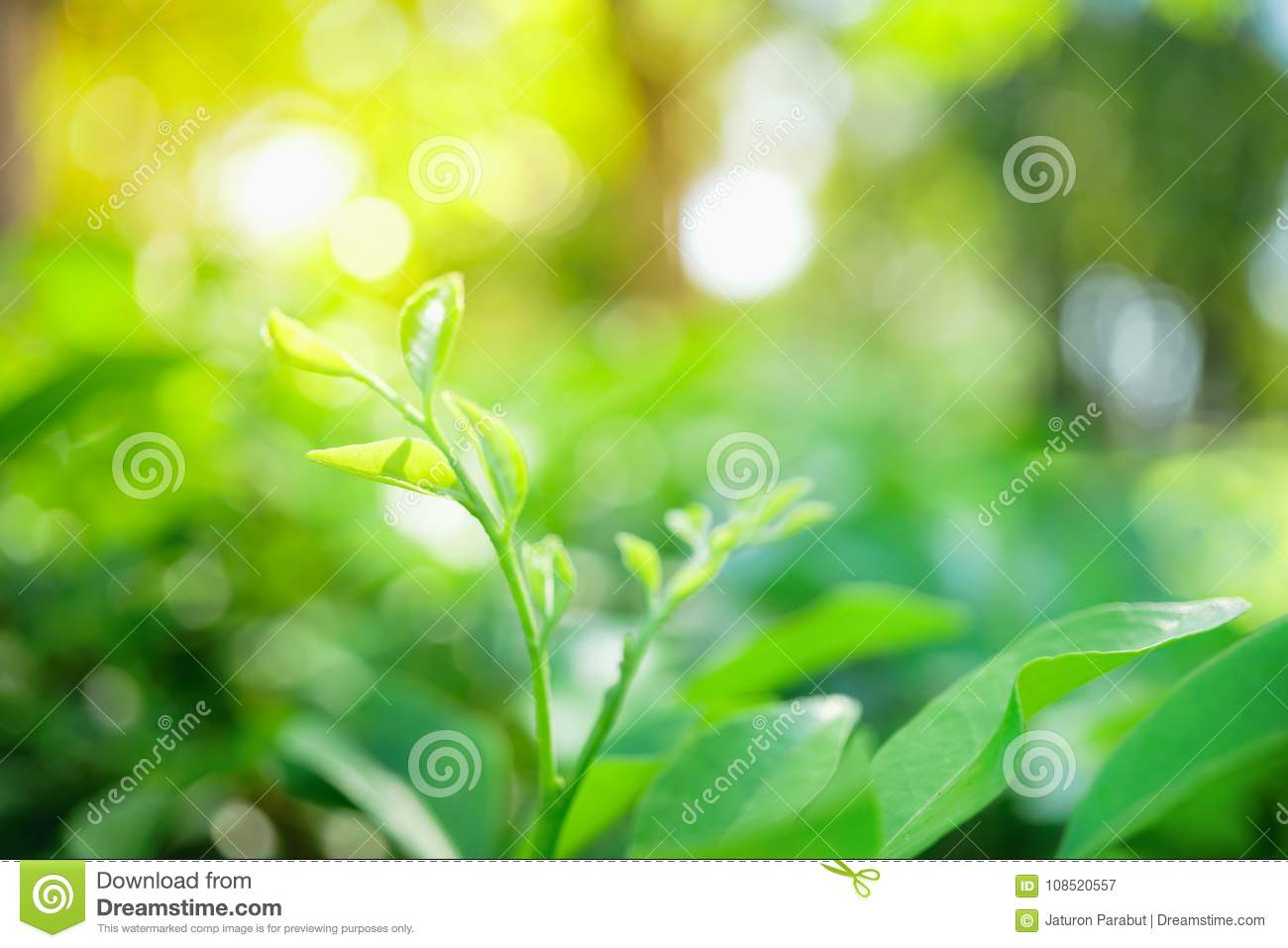 Abstract blurred close up nature of green leaf, natural green pl