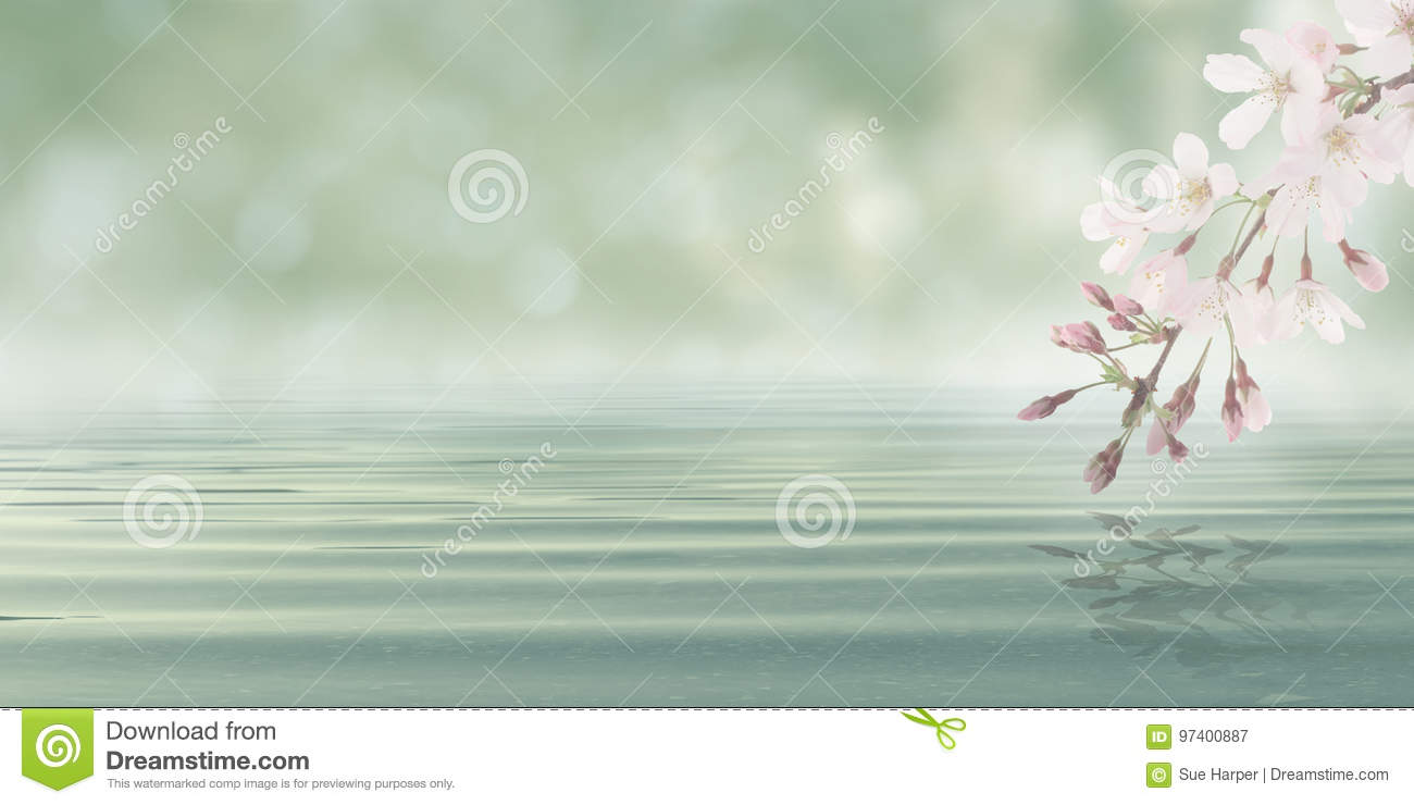 Download Abstract Bokeh Background Water With Leaves And Flowers From Blossom Plant Stock Image - Image of nature, foliage: 97400887