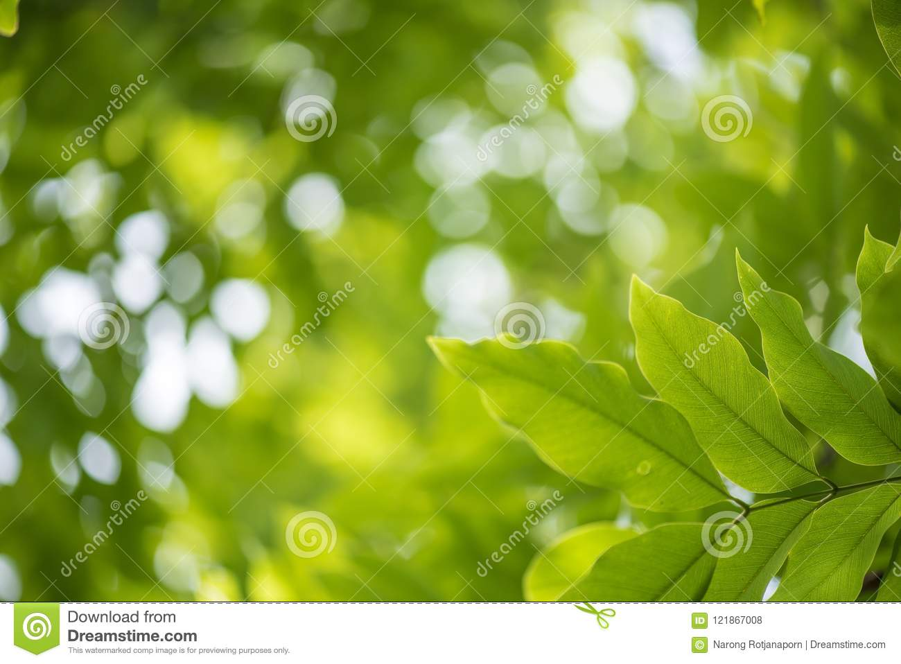 Bokeh Wallpapers High Quality: Abstract Bokeh Nature Background And Beautiful Wallpaper