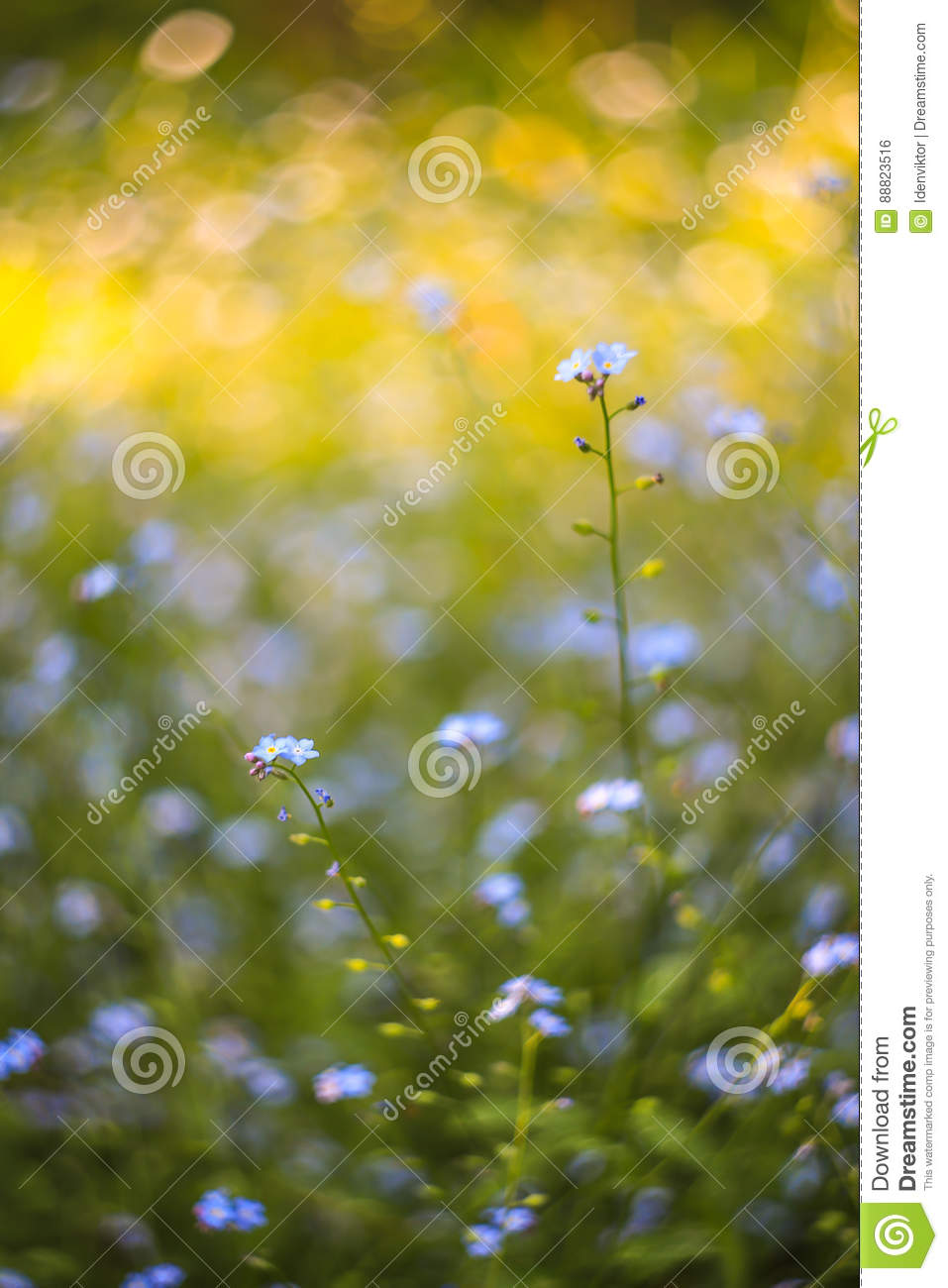 Plants for spring and summer - Abstract Bright Blurred Background With Spring And Summer With Small Blue Flowers And Plants With