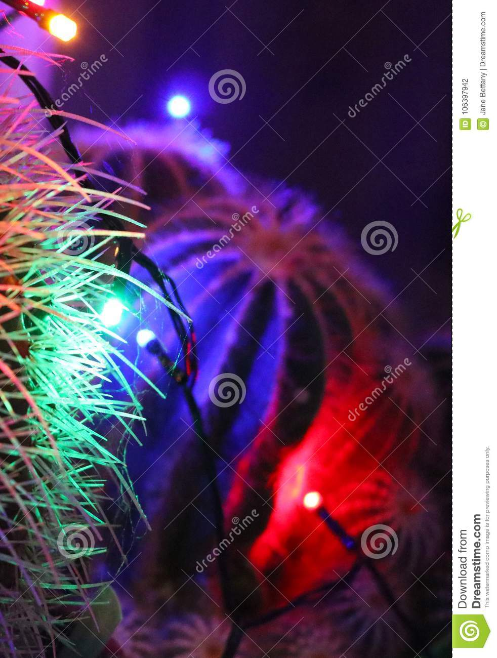 download abstract cactus spines lit by christmas lights stock photo image of fairy yellow