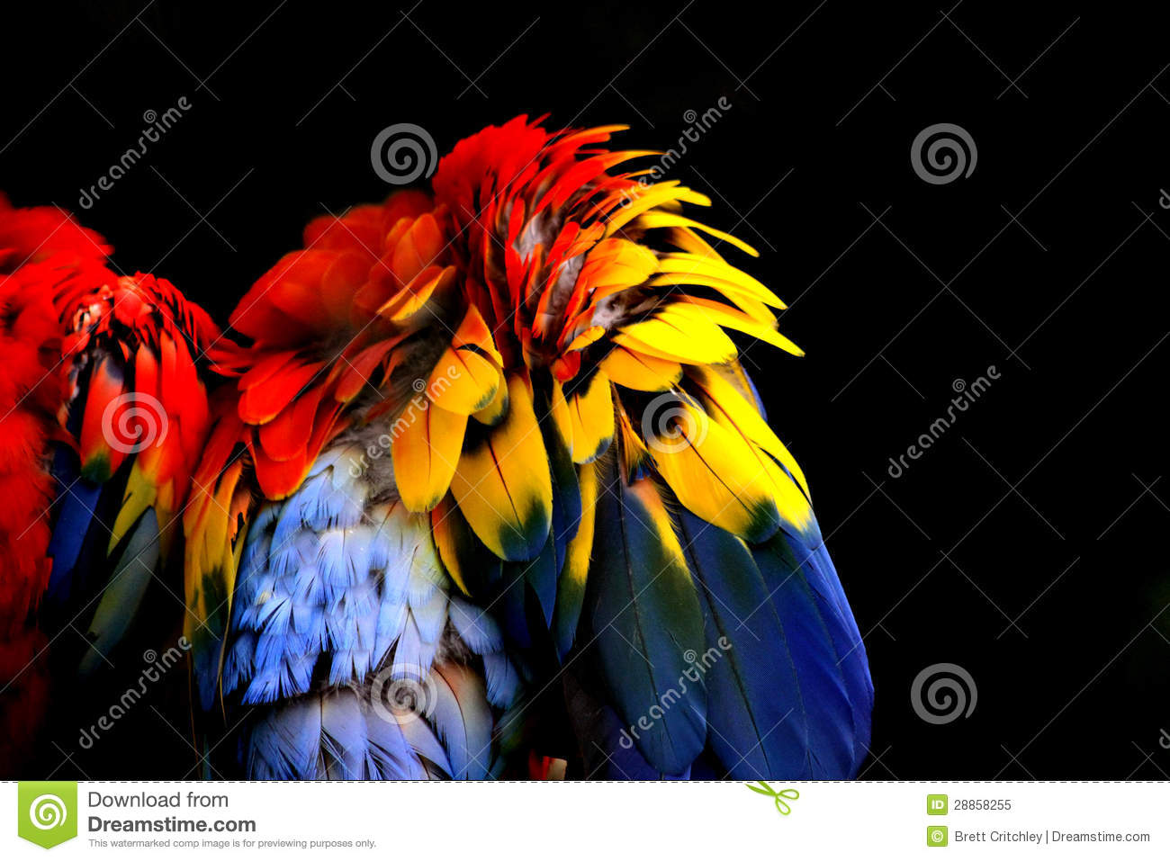 Download Abstract colorful feathers stock image. Image of colorful - 28858255